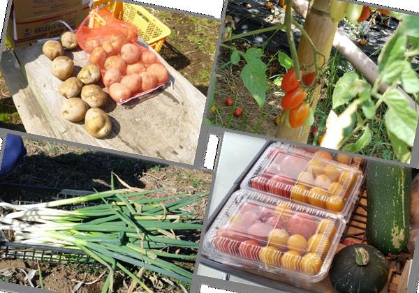 農園収穫物