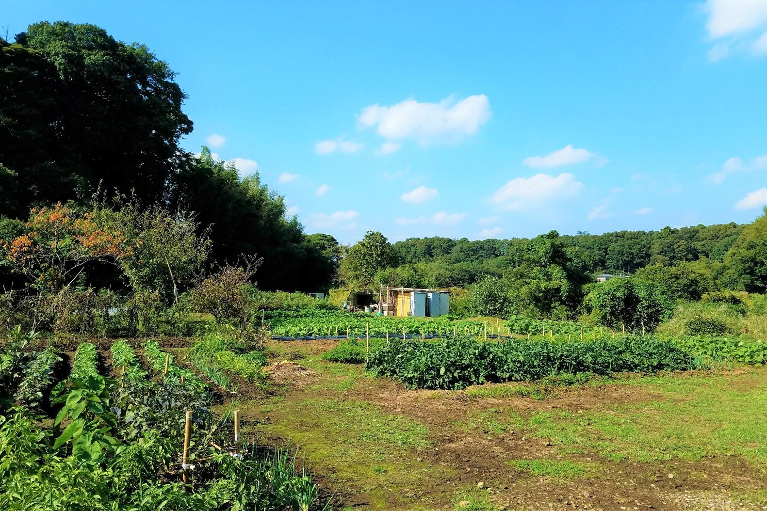 農園の様子