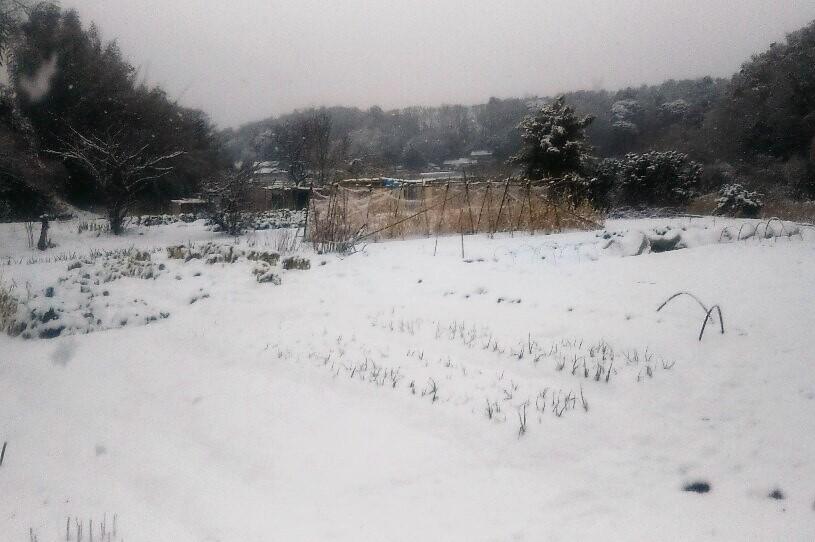 雪景色の農園